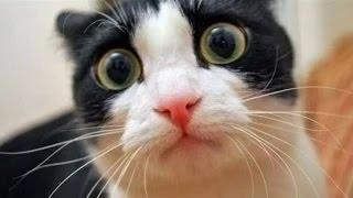getlinkyoutube.com-Videos de risa 2014 nuevos -  Videos de Risa de Gatos Chistosos -