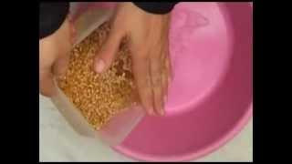 getlinkyoutube.com-faire germer du blé إعداد رشيم القمح والحبوب
