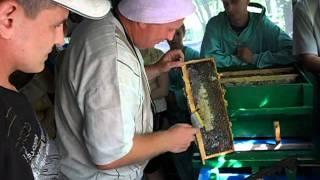 getlinkyoutube.com-Пчеловодство от Юрия с Донбасса