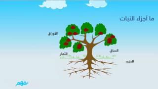 درس  النباتات وأجزاؤها - في العلوم - للصف الأول الابتدائي - المنهج السعودي - موقع نفهم