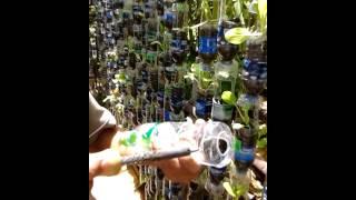 getlinkyoutube.com-ครูชาตรีตอนปลูกต้นไม้ในขวด