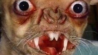 getlinkyoutube.com-【グロ 恐怖の画像 閲覧注意】怖い?でも奇形動物、生物の映像に感動!なんか泣ける写真!奇形児を出産!人間 人 あなたなら?地球がおかしい?原因!対策!