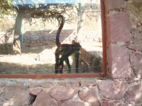 Zoologico de Mezquitic.
