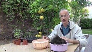 getlinkyoutube.com-كيفية زراعة بذور النباتات How to grow plants from seed