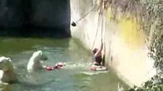 getlinkyoutube.com-Polar Bears Attack Woman at Zoo
