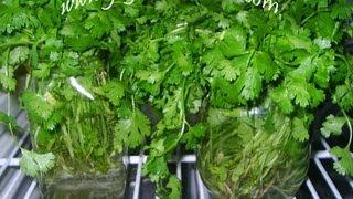 getlinkyoutube.com-Tips on Greens Preservation - Indian Andhra Telugu Cooking