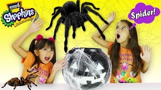 getlinkyoutube.com-GIANT SPIDER ATTACK - Giant Surprise Scary Pumpkin Toy Opening - Shopkins Season 6 - Kids Freak Out