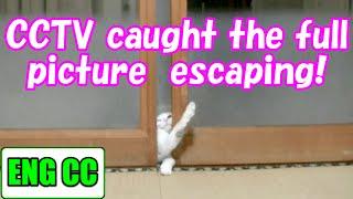 getlinkyoutube.com-夜な夜なパパのシャワーを覗きに来る猫の行動を6台のカメラで記録した結果、驚愕の真実が!! Cats escape【Eng CC】