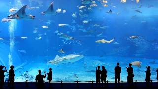 getlinkyoutube.com-Full HD 1080p - Okinawa Churaumi Aquarium