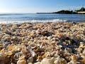 Shelling on Sanibel Island Florida Beach 2019