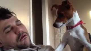 getlinkyoutube.com-Dono ronca e assusta seu cachorro. - Cute dog scared by loud snoring