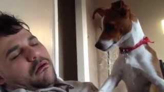 Dono ronca e assusta seu cachorro. - Cute dog scared by loud snoring