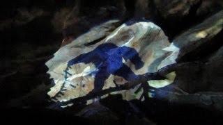 getlinkyoutube.com-Expedition Everest Fail - Walt Disney World's Animal Kingdom