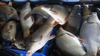 getlinkyoutube.com-ببساطة مراحل تربية الاسماك فى المزرعة السمكية