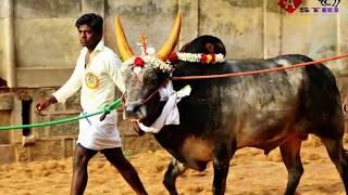 Jallikattu - Video Song 2017   Romeo Raj Films Presents