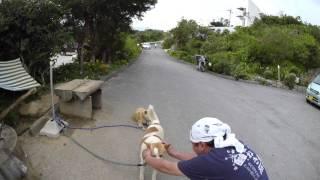 getlinkyoutube.com-与論島ビレッジ ケンとマーゴ 2015 05 02