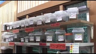 getlinkyoutube.com-カブト・クワガタ生体販売