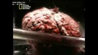 getlinkyoutube.com-اسرار دماغ ألبرت آينشتاين إهداء من كامل هابيل