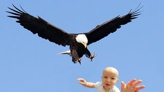 getlinkyoutube.com-EAGLE SNATCHES KID - Eagle Picks Up Baby, Fake?