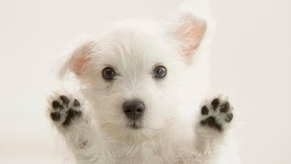 getlinkyoutube.com-Αστεία Βίντεο   Αστεία βίντεο με σκύλους