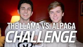 getlinkyoutube.com-THE LLAMA VS. ALPACA CHALLENGE (with Luke Korns)