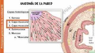 getlinkyoutube.com-Cap 62 : Principios generales de la función gastrointestinal