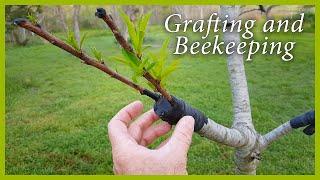 getlinkyoutube.com-Fruit Tree Grafting and Beekeeping Updates: Good News!