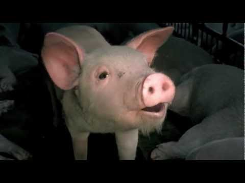 Imagine a world without factory farming - 2 min