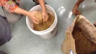 getlinkyoutube.com-CGNF Fish Amino Acid FAA recipe