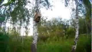 getlinkyoutube.com-Ловля роёв пчел.