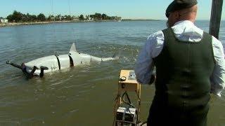 getlinkyoutube.com-Shark-Attack Defenses   MythBusters Jawsome Shark Special -- Shark Week 2012