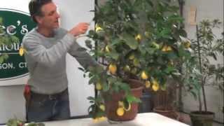 getlinkyoutube.com-Meyer Lemon Workshop Excerpt