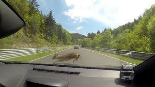 getlinkyoutube.com-Deer Gets Hit By Speeding Racer Going 112mph At Nurburgring Race Track!