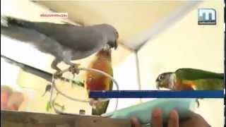 getlinkyoutube.com-Exotic Bird Training in Kerala