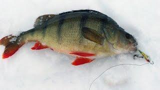 getlinkyoutube.com-Уроки по ловле окуня зимой!