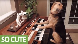 getlinkyoutube.com-This compilation of smart dogs will leave you astonished!