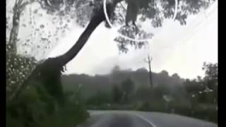 getlinkyoutube.com-Asli menyeramkan! Penampakan Kuntilanak gantung diri di pohon