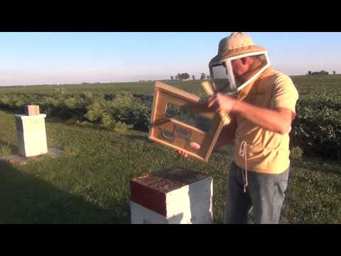 Beekeeping : How To Feed Honey Bees
