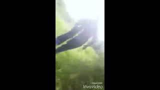 getlinkyoutube.com-Javali de 230kg avança em caçador
