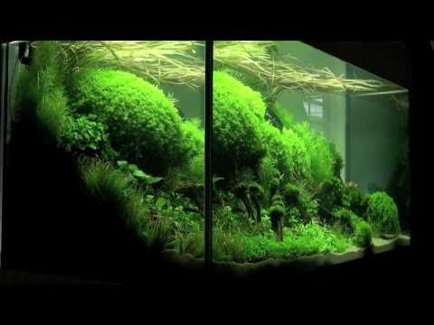 Planted Aquarium Competition Hannover 2011 - XL tanks