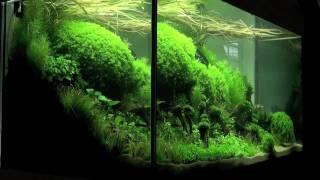 getlinkyoutube.com-Aquascaping - Aquarium Ideas from The Art of the Planted Aquarium 2011, part 1