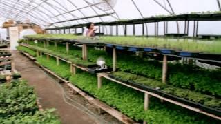 getlinkyoutube.com-Organic Agriculture in the City of Toronto - Fresh City Farms