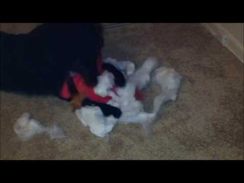 Casio Destroying Super Durable Dog Toy