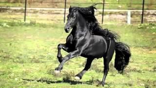 getlinkyoutube.com-Kazu da je ovo najlepsi konj na svetu