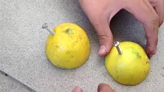 getlinkyoutube.com-Experimento de Electricidad (con limones)