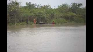 getlinkyoutube.com-Samsernagar Sundarban where villagers and tiger live side by side