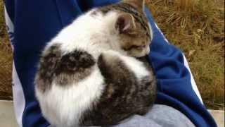 getlinkyoutube.com-庭に野良猫がやって来たよー