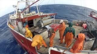 getlinkyoutube.com-WILD CAUGHT (2012 Sword-fishing Documentary)