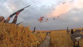getlinkyoutube.com-North Dakota goose hunting with hang loose outdoors