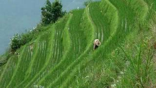 getlinkyoutube.com-Longsheng terrazas de arroz en China..wmv